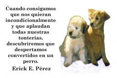 perro-querido1-e1528688747328