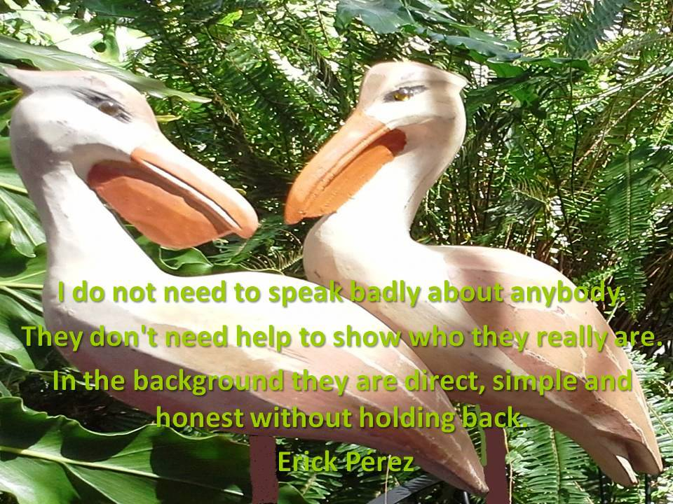 pelicanos2